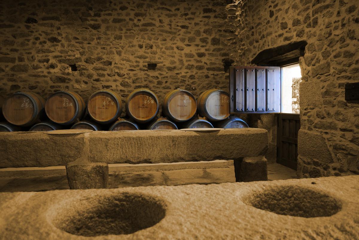 Bodega vinologica