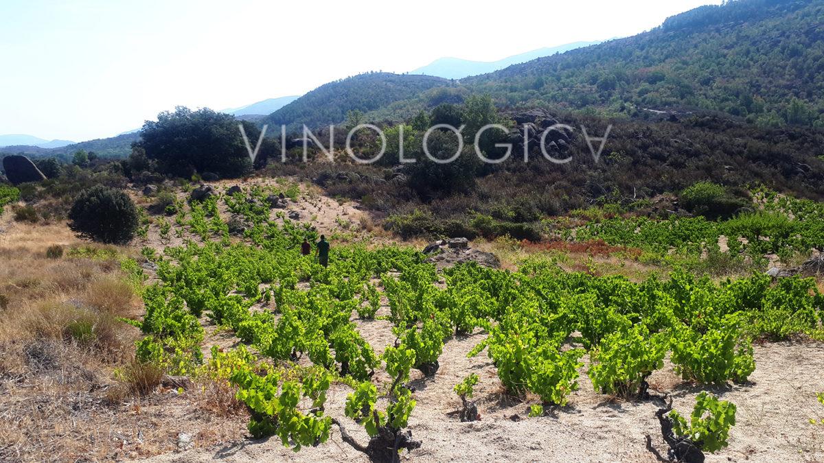 """El """"delirante"""" nuevo Proyecto con Alma en el que se embarca Vinológica"""